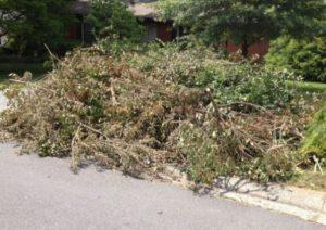 Yard Debris Removal Gilbert AZ